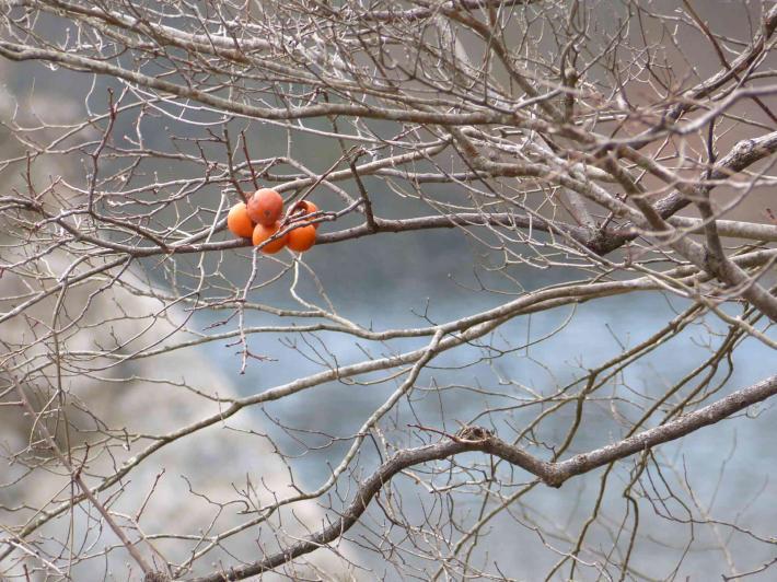 旧福知山線廃線敷ハイキング_f0296312_02052004.jpg
