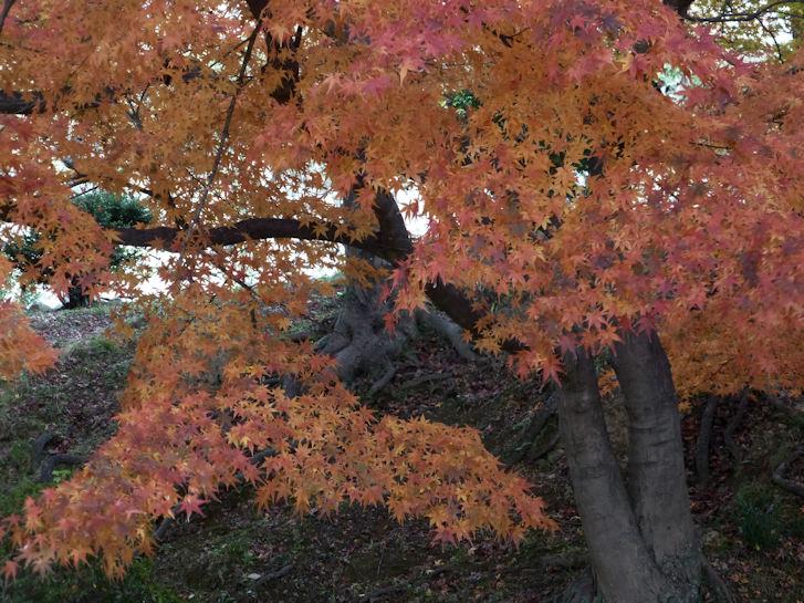 姫路・大阪・京都編(5):姫路城(15.12)_c0051620_21263718.jpg