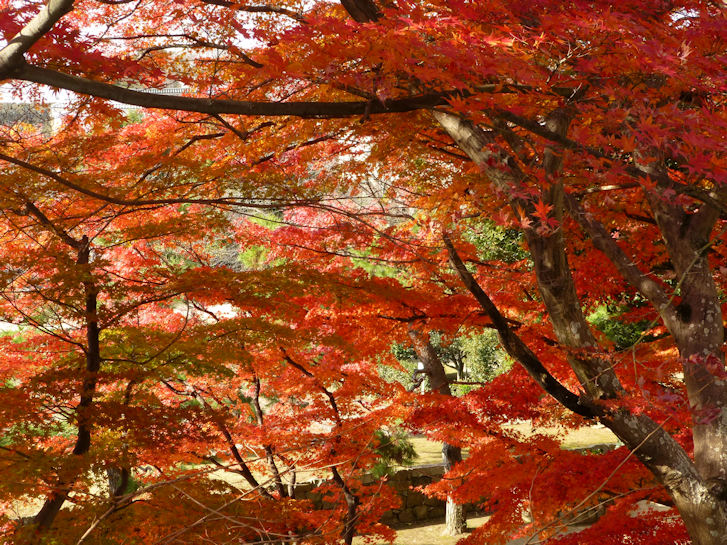 姫路・大阪・京都編(5):姫路城(15.12)_c0051620_21265087.jpg