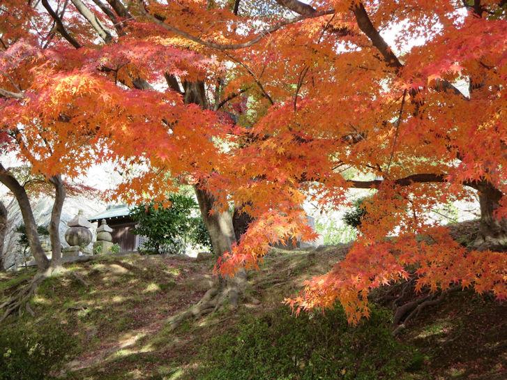 姫路・大阪・京都編(5):姫路城(15.12)_c0051620_21272531.jpg