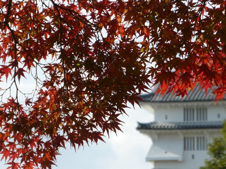 姫路・大阪・京都編(5):姫路城(15.12)_c0051620_2127971.jpg