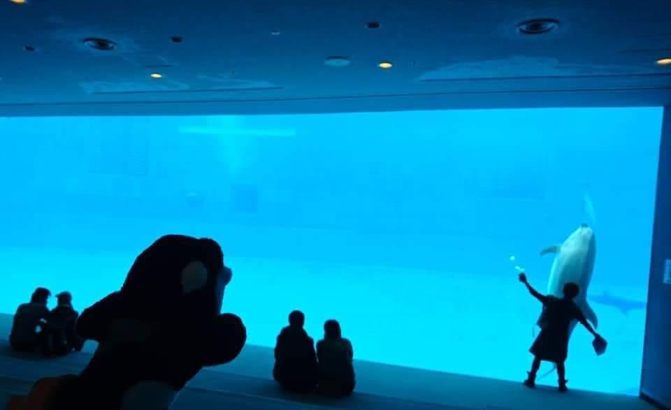 名古屋港水族館へいってきました!_f0373339_2192969.jpg