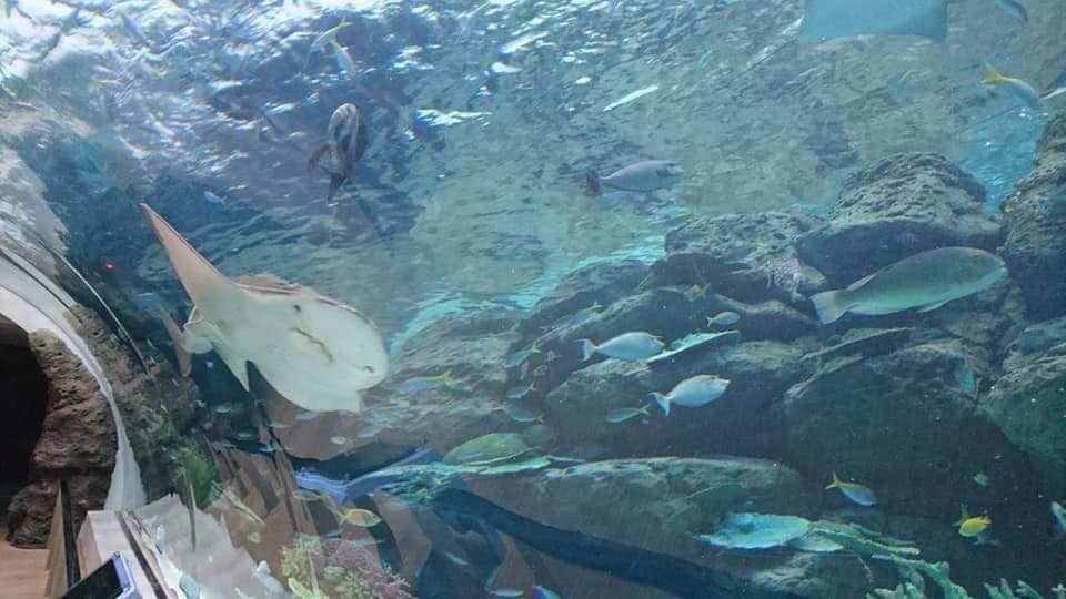 名古屋港水族館へいってきました!_f0373339_2193010.jpg