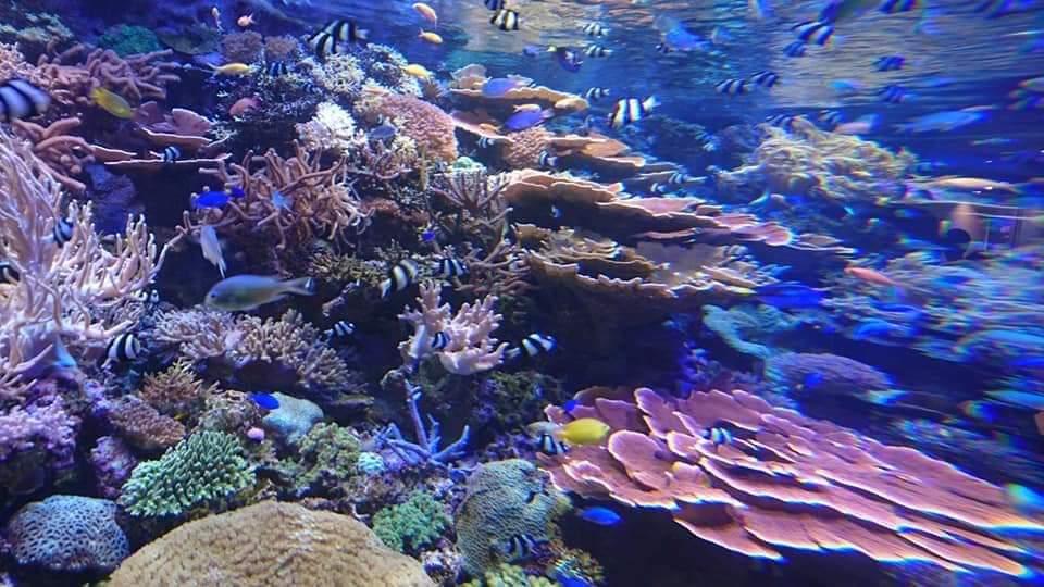 名古屋港水族館へいってきました!_f0373339_2193023.jpg