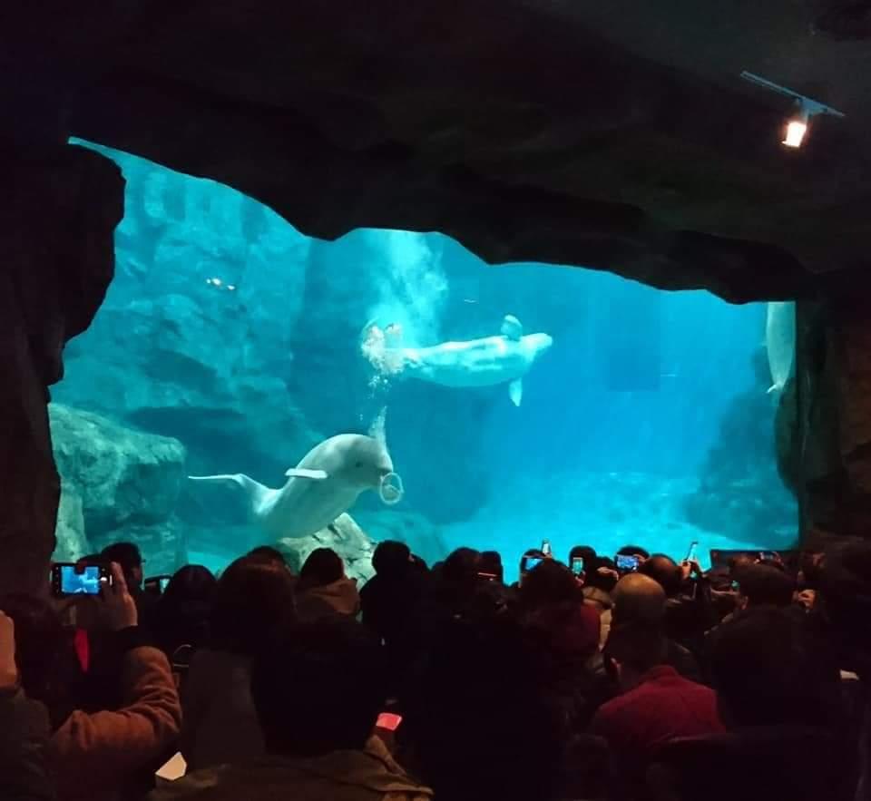 名古屋港水族館へいってきました!_f0373339_219305.jpg