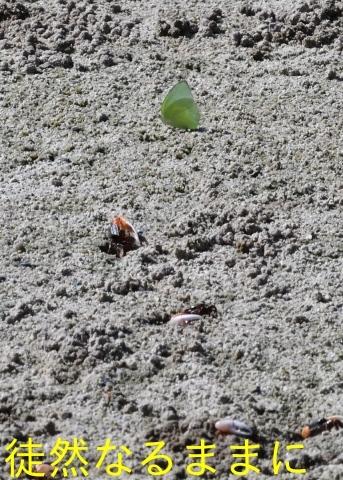 大晦日の蝶たち  in ランカウイ島_d0285540_20273378.jpg
