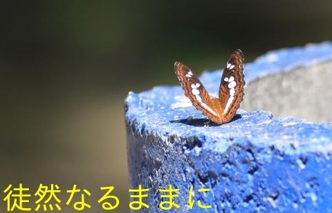 大晦日の蝶たち  in ランカウイ島_d0285540_20323851.jpg