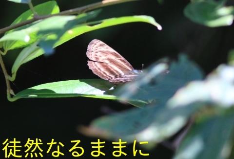 大晦日の蝶たち  in ランカウイ島_d0285540_20325081.jpg