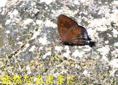 大晦日の蝶たち  in ランカウイ島_d0285540_20331591.jpg