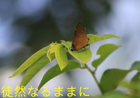大晦日の蝶たち  in ランカウイ島_d0285540_20335770.jpg