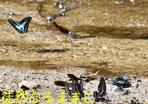 大晦日の蝶たち  in ランカウイ島_d0285540_20420131.jpg