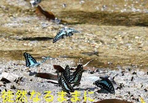 大晦日の蝶たち  in ランカウイ島_d0285540_20421115.jpg