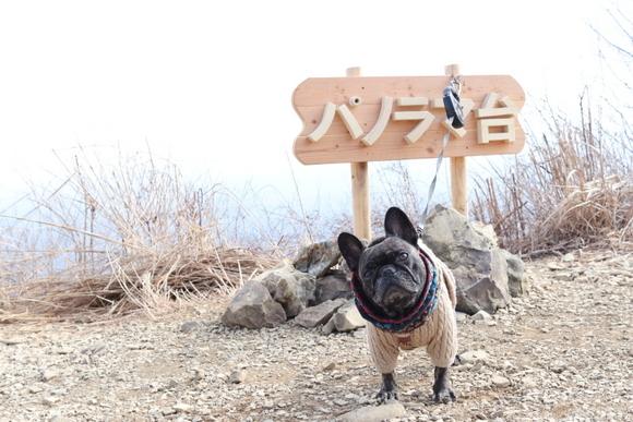 精進湖~パノラマ台ライトトレッキング_e0234741_16541310.jpg