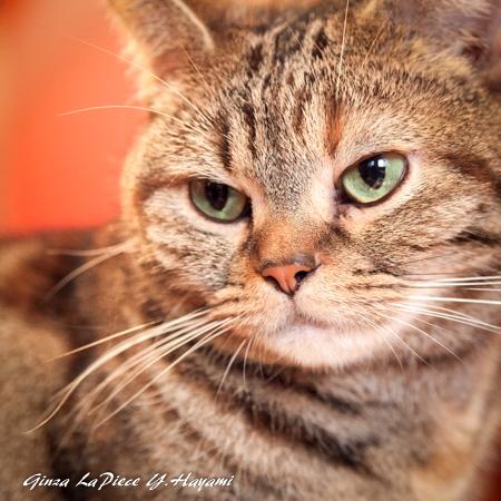 猫のいる風景 近所の子_b0133053_01471375.jpg