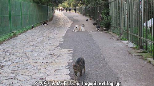 アテネに雨が降り続いた。_f0037264_02190462.jpg