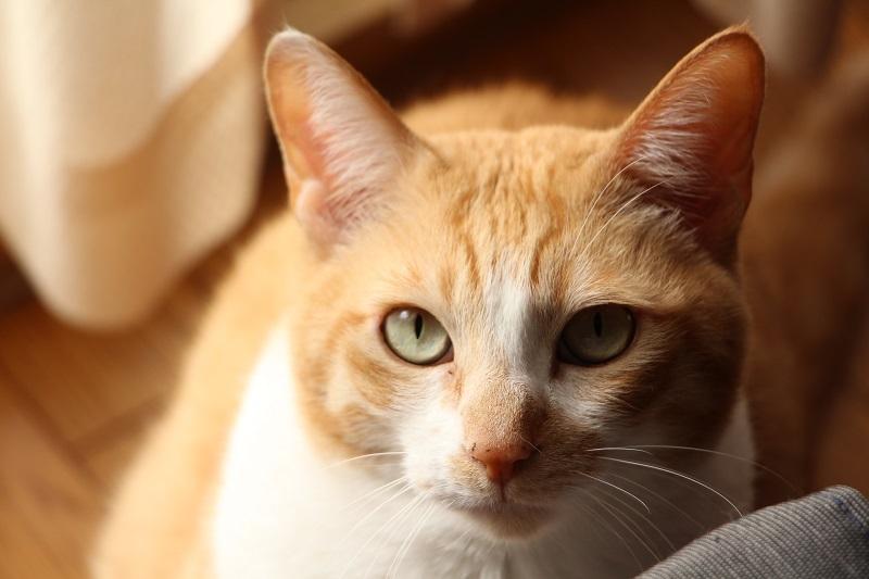 黒猫の宿命_a0333195_17120057.jpg