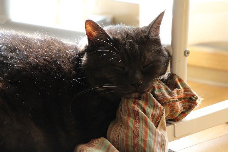 黒猫の宿命_a0333195_17120842.jpg