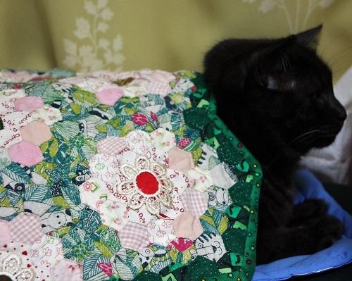 黒猫の宿命_a0333195_17144999.jpg