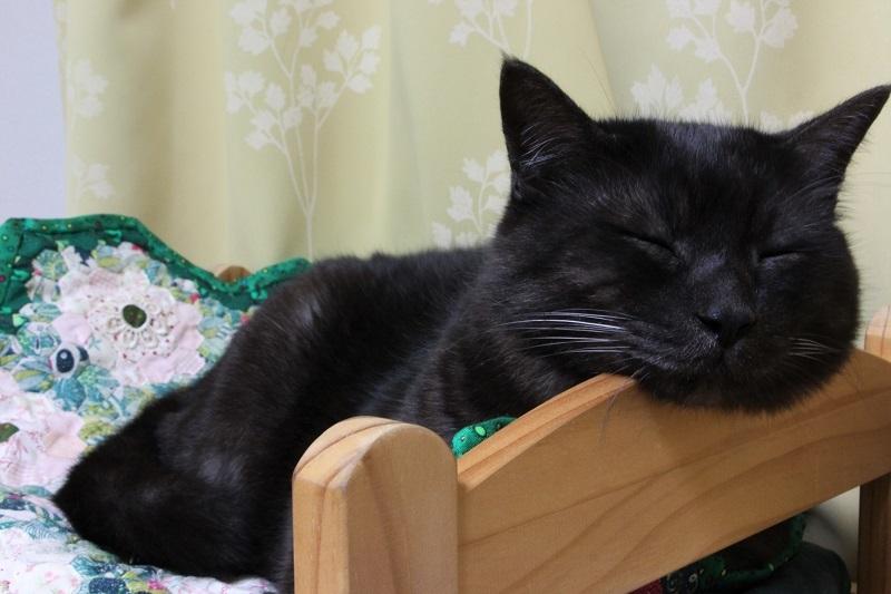 黒猫の宿命_a0333195_17155002.jpg