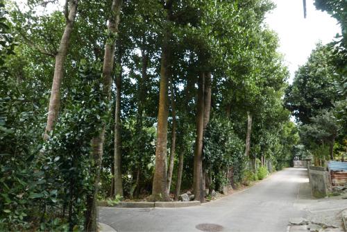 海界の村を歩く 東シナ海 久米島_d0147406_17111942.jpg