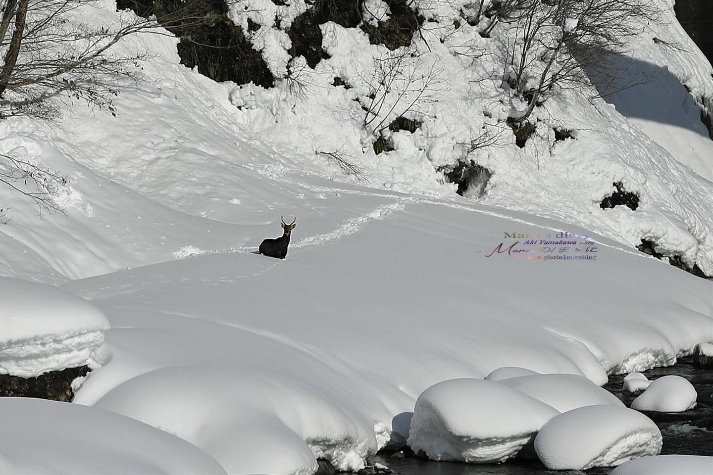まゝに/雪景6_d0342426_16433338.jpg