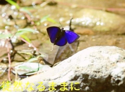 大晦日の蝶たち  in ランカウイ島_d0285540_13023449.jpg