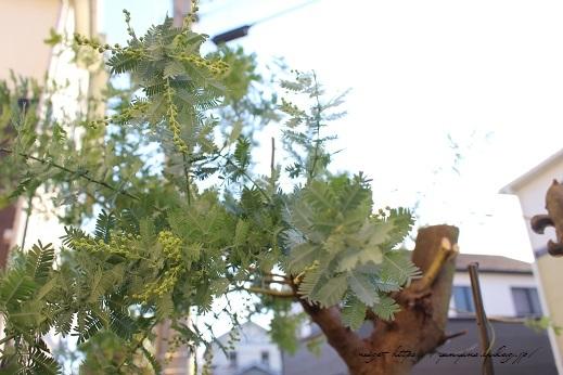 庭木のグリーンを使って0円で楽しめる簡単スワッグの作り方♪_f0023333_21274190.jpg