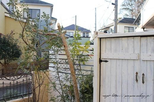 庭木のグリーンを使って0円で楽しめる簡単スワッグの作り方♪_f0023333_21274565.jpg