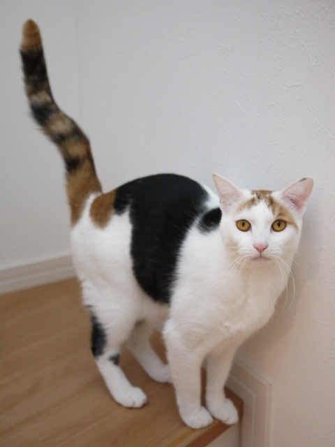猫のお留守番 みつちゃん編。_a0143140_17015039.jpg