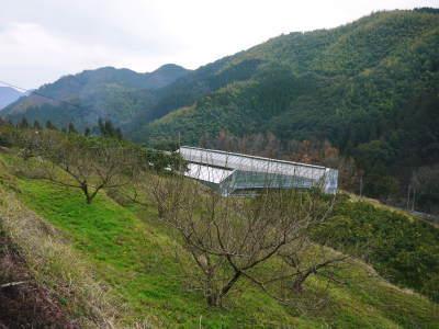 山あいの南高梅 冬の剪定2019 その1:弱い枝に元気な花を咲かせ南高梅の果実を実らせます!_a0254656_16485686.jpg