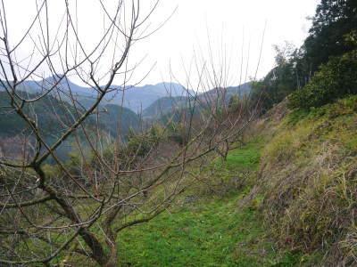 山あいの南高梅 冬の剪定2019 その1:弱い枝に元気な花を咲かせ南高梅の果実を実らせます!_a0254656_17150521.jpg