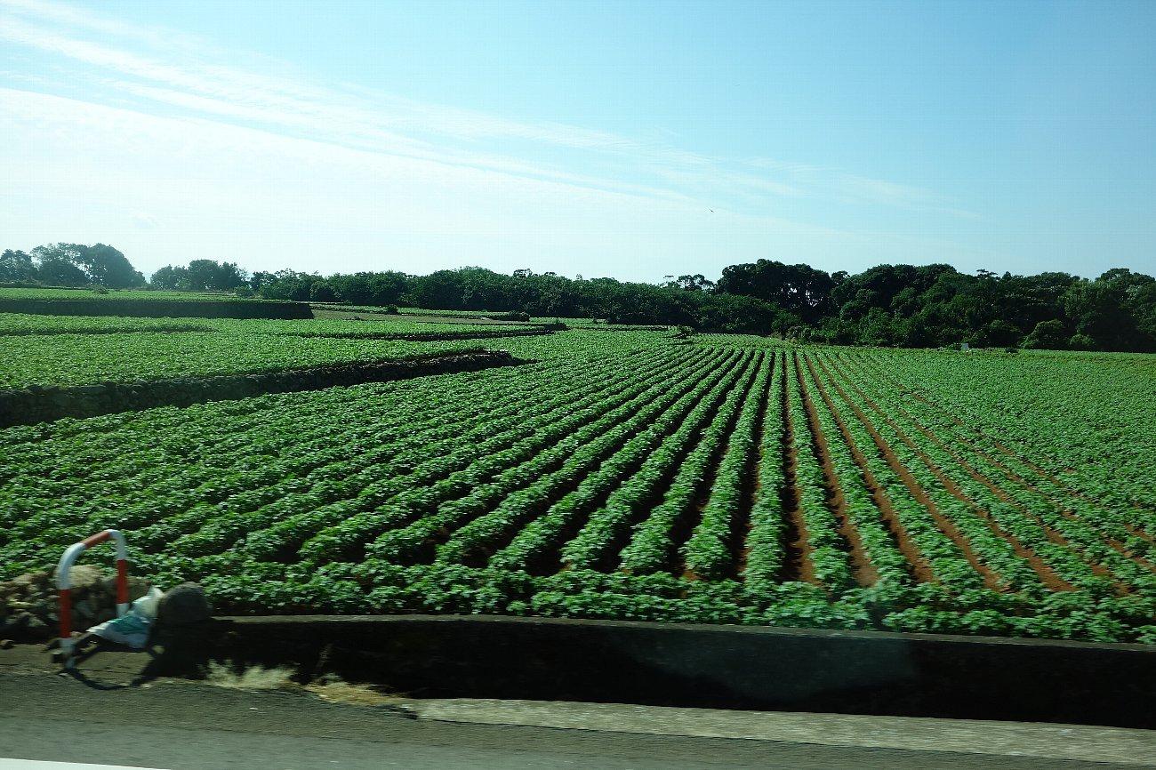 長崎市から島原半島へ_c0112559_08131204.jpg