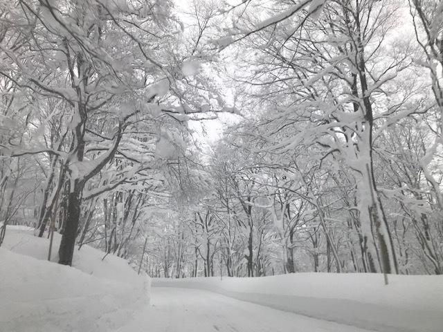 青森・雪!雪の八甲田ホテルへ_f0232994_13424889.jpg