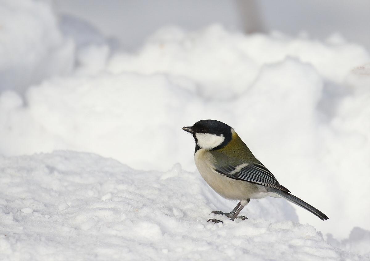 雪原をトコトコ・・・_c0113597_12585418.jpg