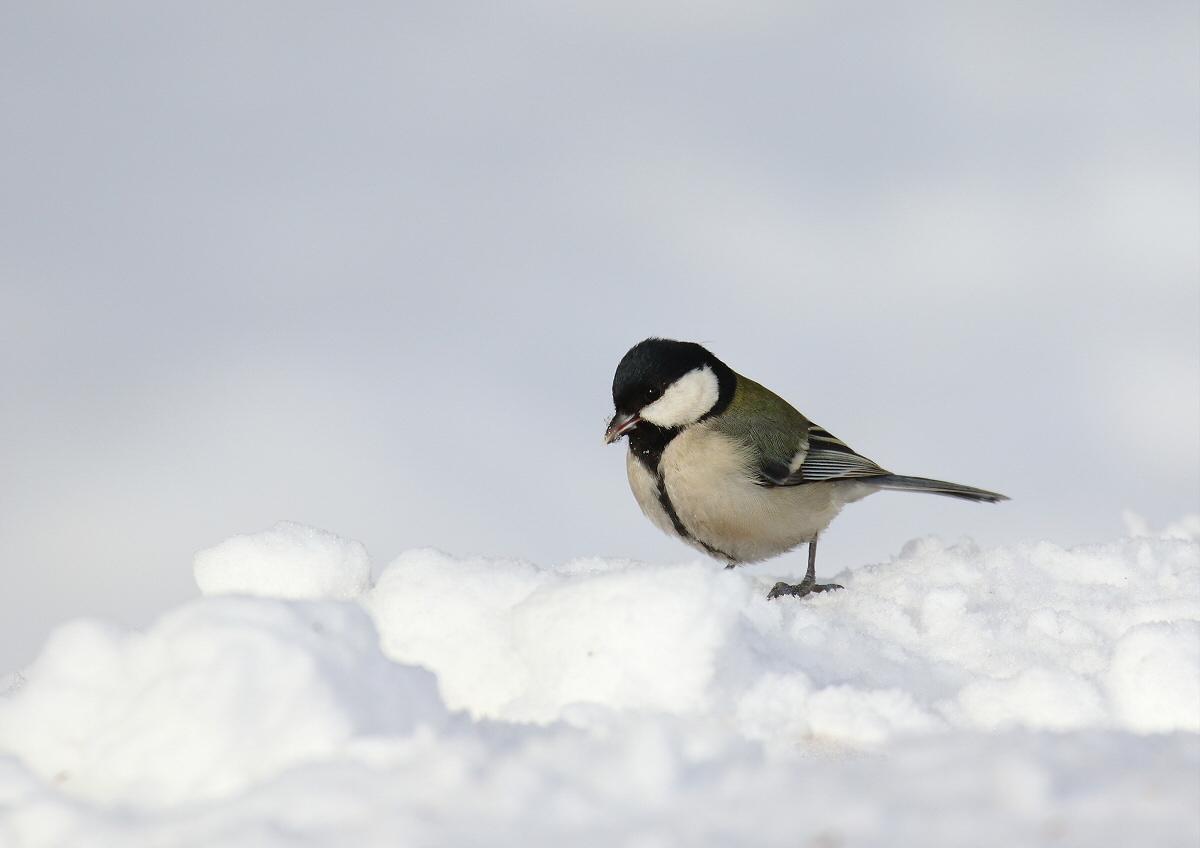雪原をトコトコ・・・_c0113597_12590811.jpg