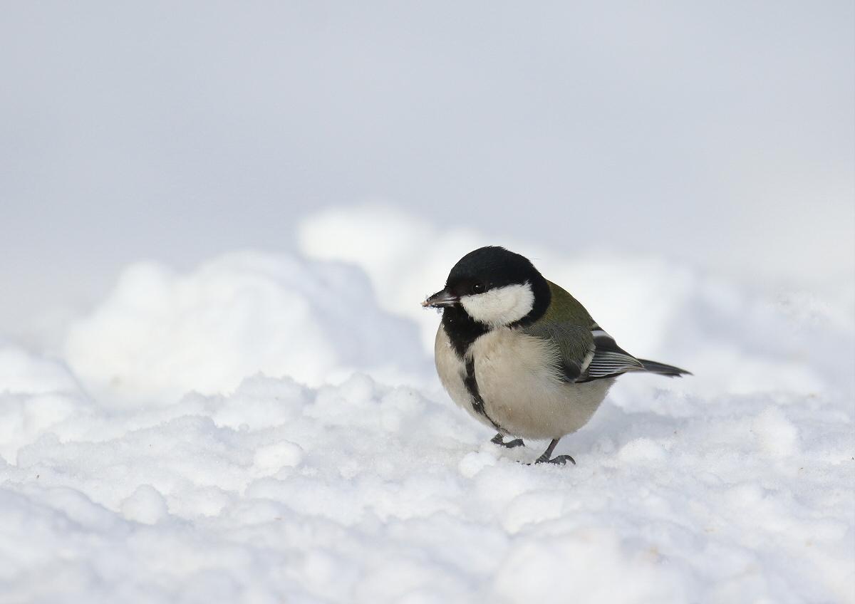 雪原をトコトコ・・・_c0113597_12592252.jpg