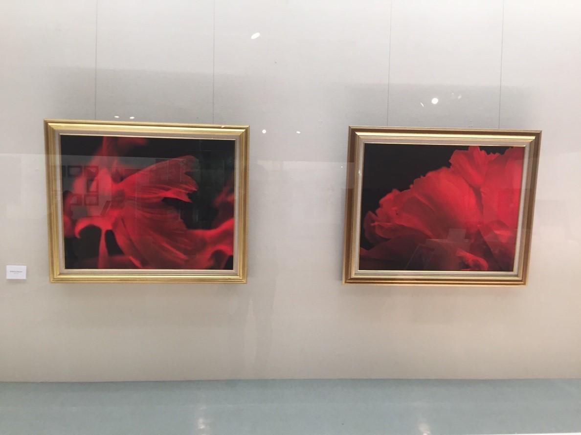 photoexhibition  代表展 vol.3  @鳥取県立博物館_e0115904_15310890.jpg