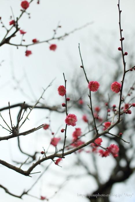 春めく_e0347431_00082424.jpg