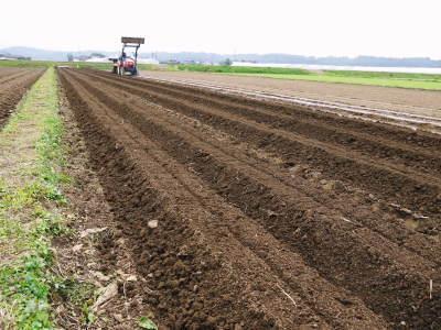 有機栽培の水田ごぼう 現在の発芽の様子と水田での栽培ならではのごぼうなんです!(前編)_a0254656_17282361.jpg