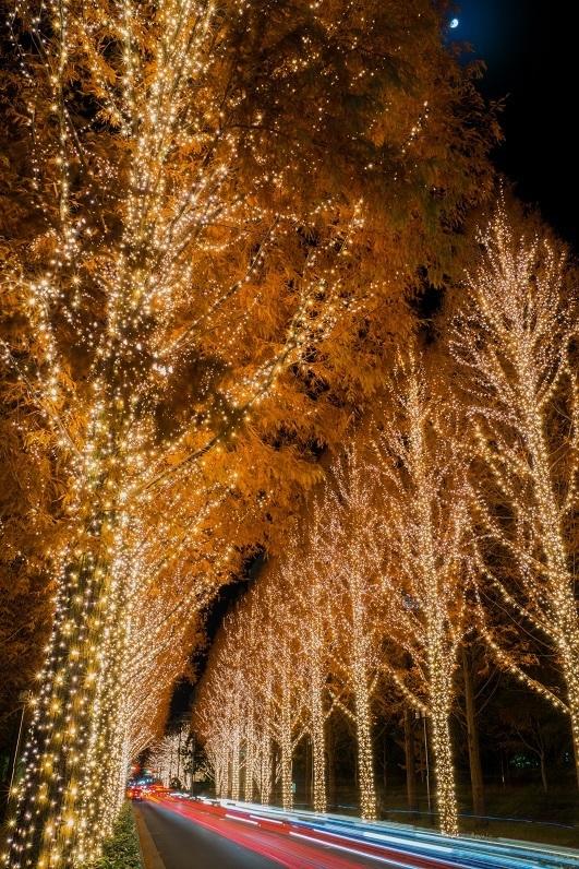 【ブログテーマ】お気に入りイルミネーション&私のhappyクリスマス!_f0357923_21161771.jpg