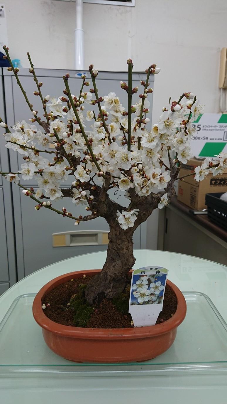 春の香り2_d0155439_17352766.jpg