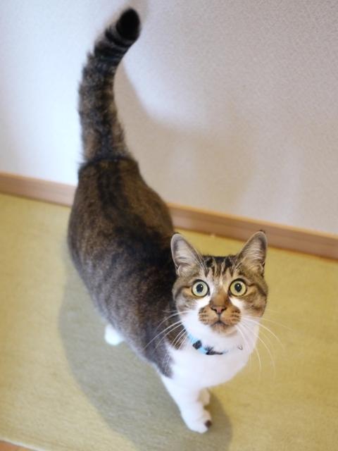 猫のお留守番 ハッピーくん編。_a0143140_22401514.jpg
