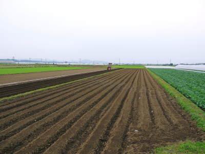 有機栽培の水田ごぼう 現在の発芽の様子と水田での栽培ならではのごぼうなんです!(後編)_a0254656_16362673.jpg