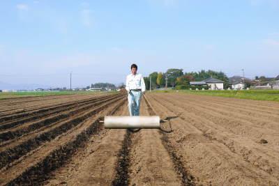 有機栽培の水田ごぼう 現在の発芽の様子と水田での栽培ならではのごぼうなんです!(後編)_a0254656_16523324.jpg