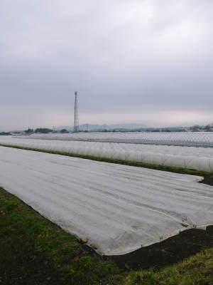 有機栽培の水田ごぼう 現在の発芽の様子と水田での栽培ならではのごぼうなんです!(後編)_a0254656_16572476.jpg