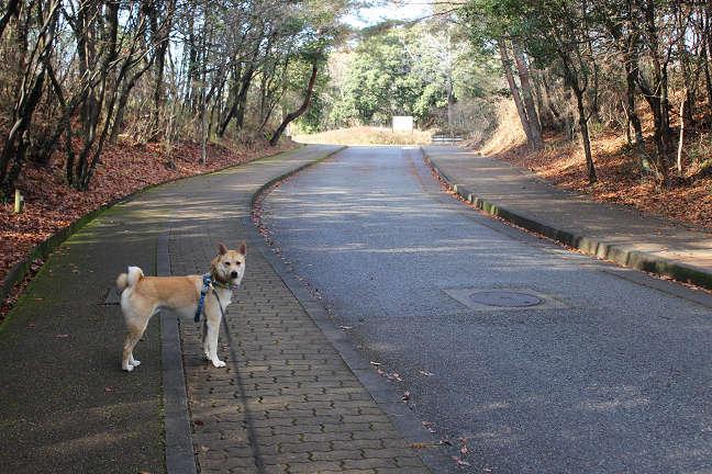 三木山森林公園へ_e0371017_22484589.jpg
