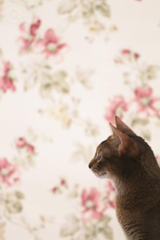 [猫的]欧羅巴_e0090124_23533614.jpg