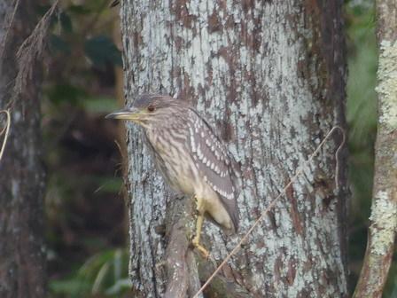 里山の鳥の観察_a0123836_17285272.jpg