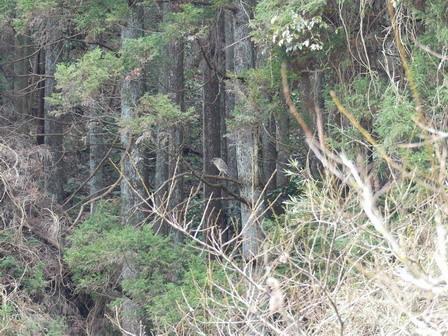 里山の鳥の観察_a0123836_17285640.jpg