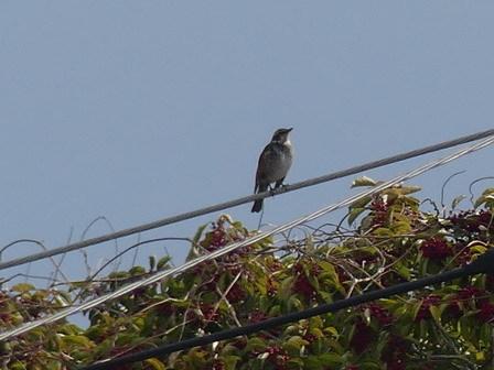 里山の鳥の観察_a0123836_17324252.jpg